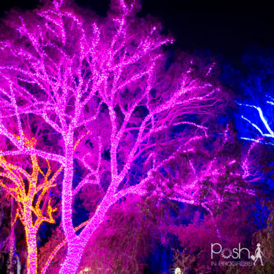 Phoenix Zoo Lights Sneak Peek