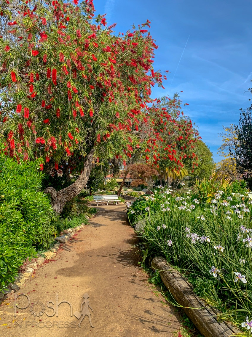 south coast botanic garden 2