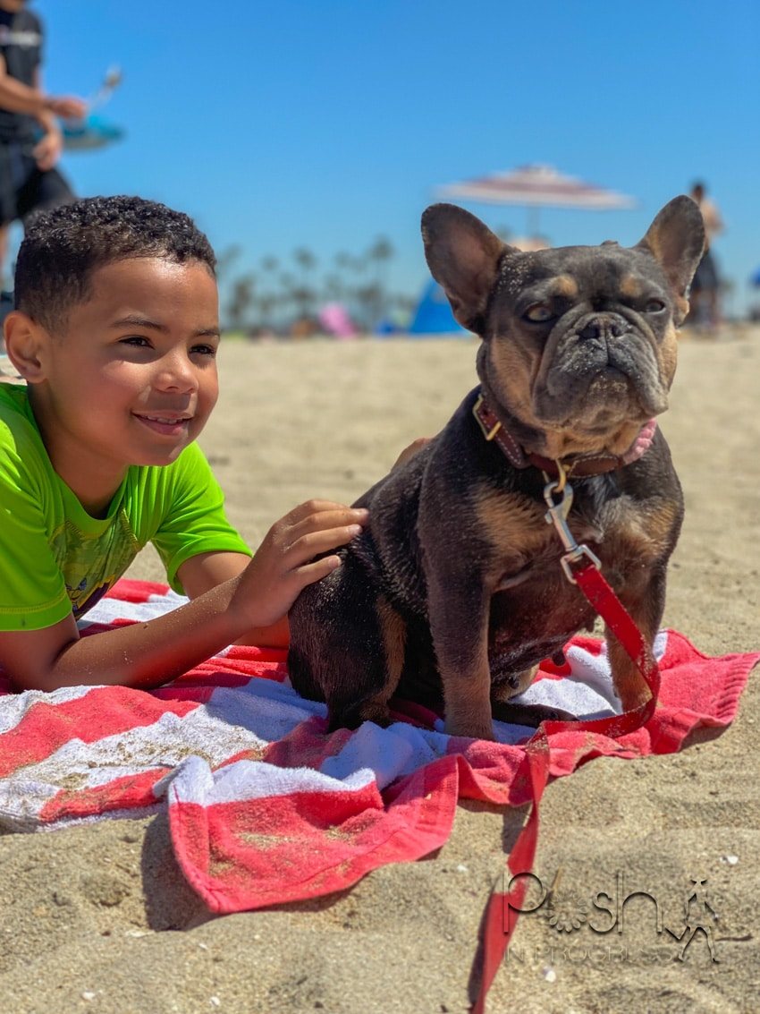 5 Essential Tips for Taking a Dog to the Beach in Honor of National Pet Day featured by top LA lifestyle blogger, Posh In Progress