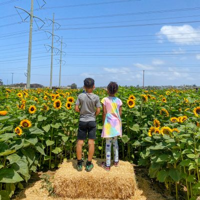 5 Tips to Take the Best Pictures at Carlsbad Flower Fields