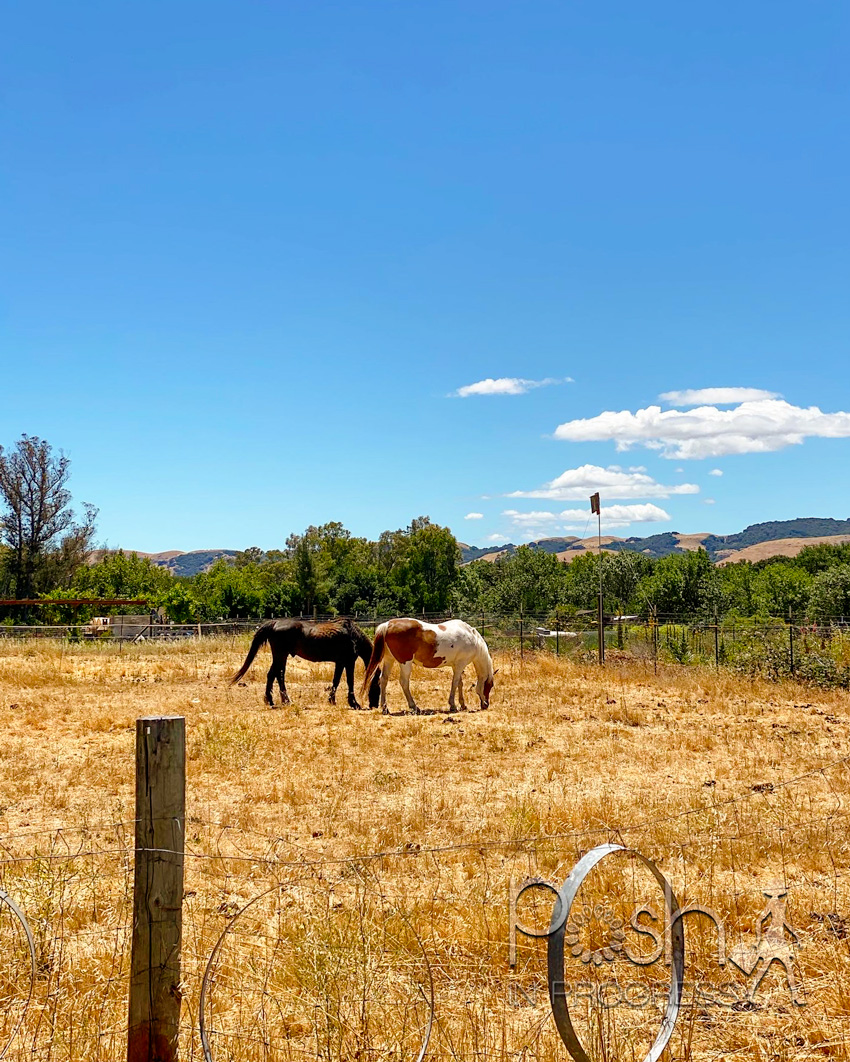 Sonoma Wine Tour by popular LA lifestyle blog, Posh in Progress: image of two horses in a field.